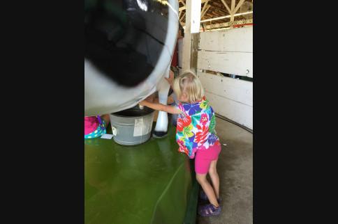 Kids Activities | Rice County Fair
